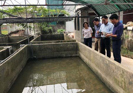Anh Đinh Văn Việt giới thiệu quy trình cấy ghép trai lấy ngọc.