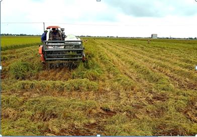 Nhờ dồn điền đổi thửa, việc sản xuất của nông dân đã đạt hiệu quả cao hơn. Trong ảnh: Nông dân xã Định Hóa (Kim Sơn) thực hiện cơ giới hóa trong khâu thu hoạch. Ảnh: Thái Học