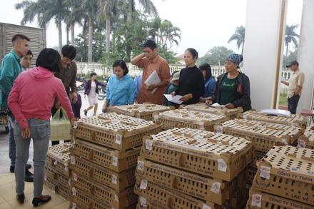 Người dân xã Ninh Thắng (Hoa Lư) nhận gà giống hỗ trợ.