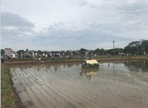 Trình diễn máy cấy tại mô hình lúa chất lượng cao theo hướng hữu cơ tại xã Khánh Cường